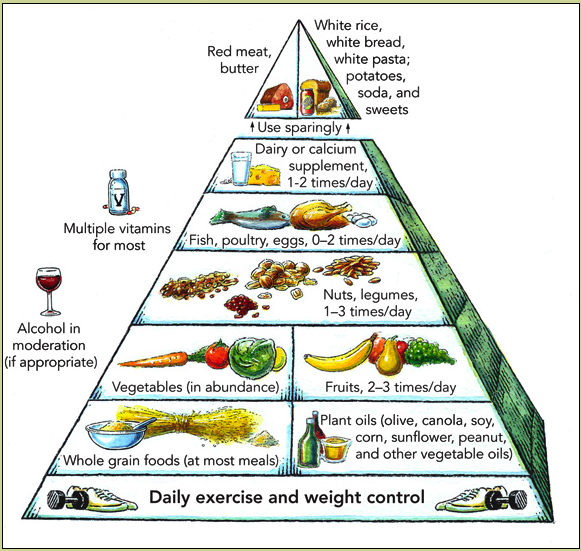 The Harvard School Of Public Health Food Pyramid