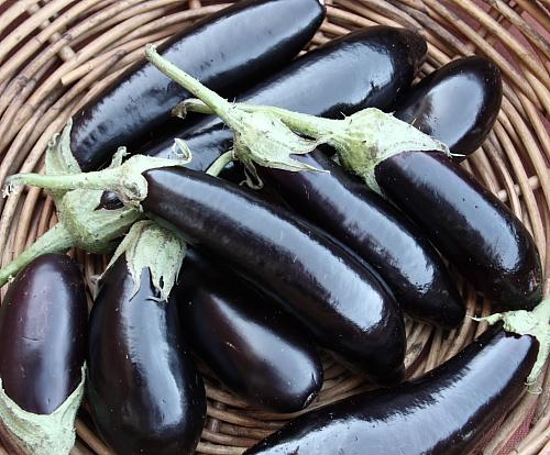 italian-eggplant
