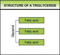 Article courtesy of Donna Hargrove  D O   Nutrition EditorTriglycerides Structure